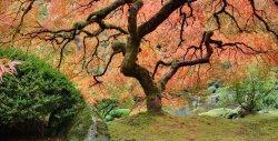 Япония: дегустация осени