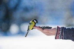 Зачем москвичи стреляют в птиц